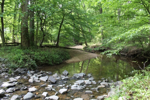 Stream Valley Project - spring 2016 2016-05-20 166